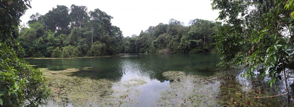MacRichie reservoir Singapour