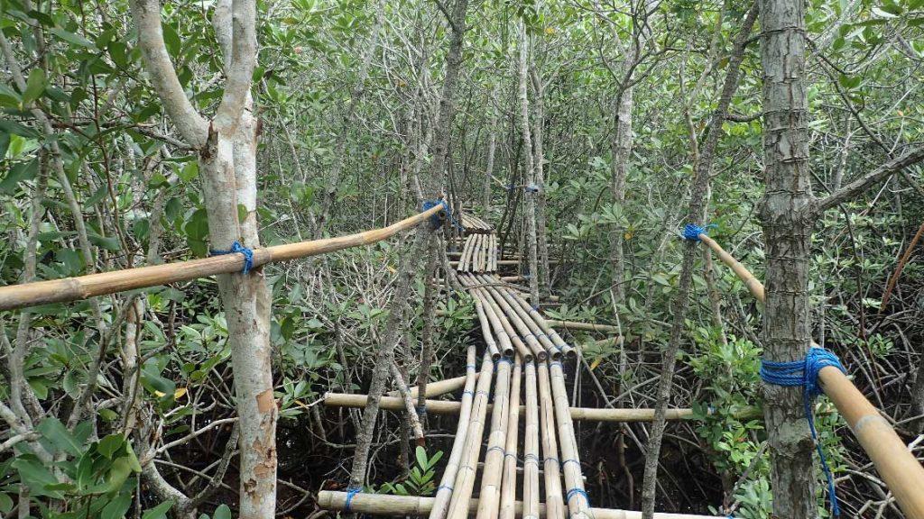 pont mangrove lambongan
