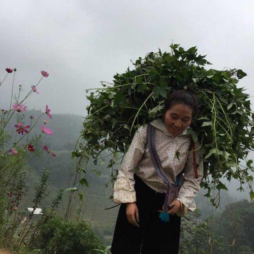 En mode cueillette - Sapa -Vietnam